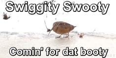 Swiggity Swooty