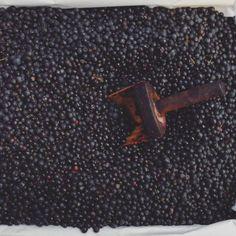 Agraz / Blueberry / unreife Traube oder Blaubeere #learnspanish #learningspanish #deutschlernen #lernendeutsch #learningenglish #learnenglish #español #fruits #vegetables #natur Instagram Accounts, Learn German, Nature