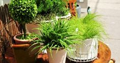 7 INDOOR GREEN PLANTS OF EASY TREATMENT THAT WILL MAKE YOUR HOME BRIGHT GREEN!