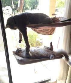 Cat slap or high five? - credit to: swipurr.com