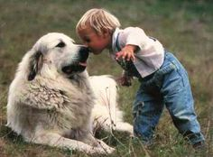 A boy and his Great Pyrenees ~