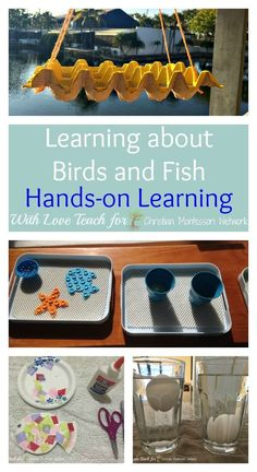 FUN hands on learning for exploring God's creation of fish and birds! With Love Teach shares on ChristianMontessoriNetwork.com