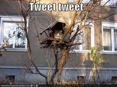 tweety bird :))