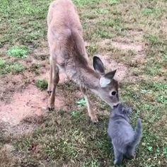Animals And Pets, Baby Animals, Funny Animals, Cute Animals, Animal Tv, Animal Action, Unlikely Animal Friends, Cute Kiss, Mundo Animal