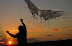 Flying wings kite