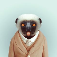 Animal Fashion : http://www.thephotomag.com/2013/03/hilarious-zoo-portraits-of-animals.html
