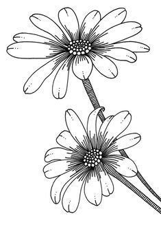Title: Flower rubber stamp designs Author/Illustrator: Emily Wallis Publisher: Penny Black Inc. high Materials: Rotring pen Description: A selection of my latest rubber stamp designs for Penny Black Inc, California Flower Line Drawings, Flower Sketches, Embroidery Patterns, Hand Embroidery, Coloring Books, Coloring Pages, Colouring, Floral Drawing, Flower Doodles