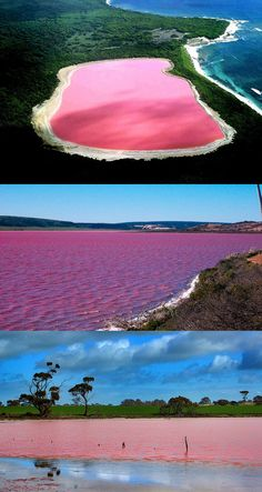 Hillier Lake, Western Australia. The worlds only naturally occurring pink lake.