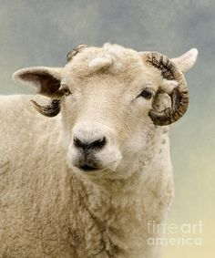Title  Ram   Artist  Linsey Williams   Medium  Photograph - Photography And Texture