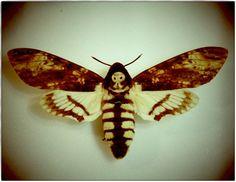 Death Head Moth Inspiration
