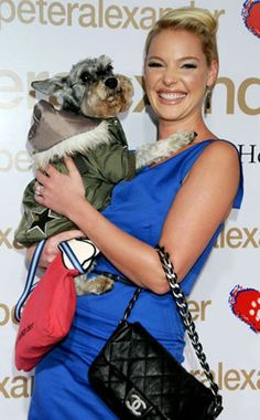KATHERINE HEIGL  Miniature schnauzer Romeo is just one of five pups in Katherine and hubby Josh Kelley's pack.