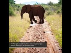 Madikwe Safari Lodge in South Africa - swim while watching elephants!  Images: Madikwe Safari Lodge // Safari in South Africa