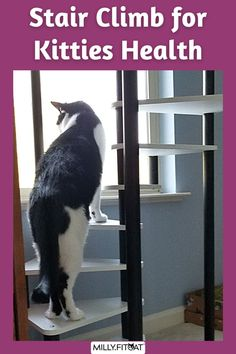 Does your cat enjoy looking out the window? A Cat Tree placed in the right spot can help kitty see what's going on outside. The MillyFitcat Cat Tree has a heavy weighted base and a Cat Bed at the top for feline relaxation. The unique Spiral Cat Stairs makes it fun for your pet to climb as well as interesting to watch the action also. The best Cat Furniture for exercise and fitness paws down. Click or Claw over to our Etsy Shop for a full description. Meow! #catfurniture #cattree #cattower Cool Cat Trees, Cool Cats, Cat Stairs, Cat Exercise, Tree Plan, Cat Activity, Cat Towers, Cat Climbing, Happy Animals