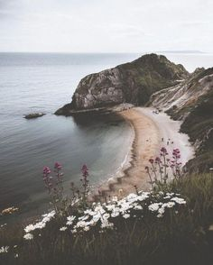 Beautiful beach view. Rock cliffs. Quiet location. Secluded. Seaside flowers. Wild flower.