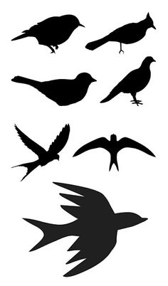 Silhouette of birds Silhouette Images, Animal Silhouette, Silhouette Portrait, Silhouettes, Silhouette Machine, Silhouette Cameo Projects, Bird Art, Paper Cutting, Paper Art