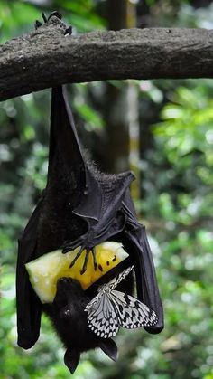 Butterfly shares breakfast...