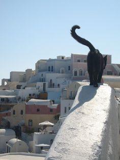 Black cat in Santorini, Greece.