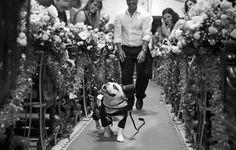 """A categoria """"Pet on Wedding"""" mostra o registro do melhor amigo do homem em seu casamento.  O registro da simpática Panqueca feito por Luiza Reis levou o PopWA"""