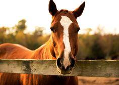 Sunset Horse Photo - Fine Art Print by Studio407PrintShop © Chelsea Mazur Photography 2012-2015 :: https://www.etsy.com/shop/Studio407PrintShop