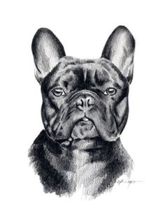 Gallery quality French Bulldog fine art at studio direct prices from artist David J Rogers. The perfect gift for the French Bulldog lover! Animal Drawings, Pencil Drawings, Bulldogs, French Bulldog Drawing, Desenho Tattoo, American Indian Art, Dog Portraits, Cute Dogs, Art Prints