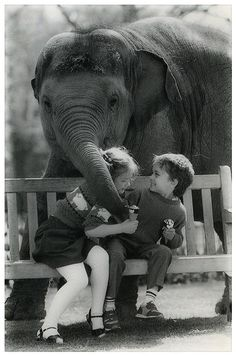 Beautiful moments in life : elephant love Animals For Kids, Animals And Pets, Baby Animals, Cute Animals, Beautiful Creatures, Animals Beautiful, Elephas Maximus, Elephant Love, Elephant Walk