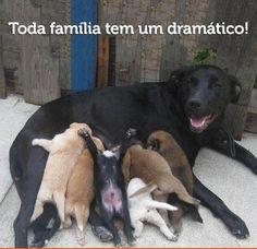 MIADOS NA WEB =^..^=: Toda familia tem um Dramático