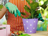 Zmlazování a množení pokojových rostlin: Jak postupovat?