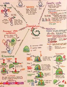 Introductory Biochemistry Flowcharts - Introductory Biochemistry Flowcharts – Love, Life and Position-time Graphs - Ap Biology, Study Biology, Biology Lessons, Cell Biology, Science Biology, Life Science, Biology Memes, Biology Review, Biology Projects