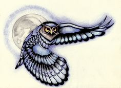 Owl colored draw