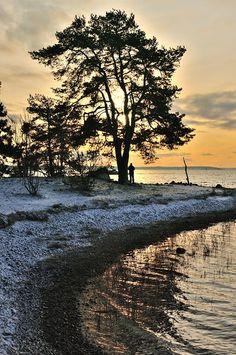 Turku - Finland Places To Travel, Places To Go, Turku Finland, Birches, River Bank, Forest Garden, Just Dream, Marimekko, Archipelago