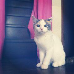 にゃ #kitten #catsofinstagram #catstagram #kitty #cat #cats #ねこ部 #ねこ #猫 Polon - @sanchelove- #webstagram