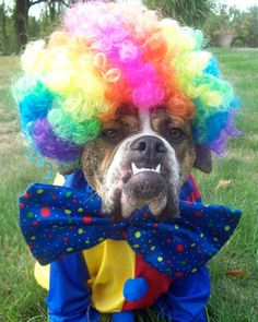 Not So Scary Circus Clown