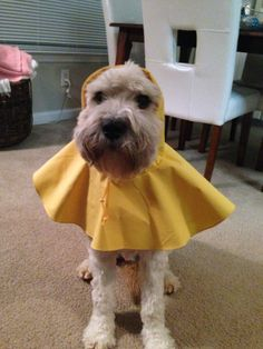 This raincoat will suffice! :-) lol