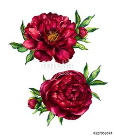 Set of watercolor red peonies bouquets Royalty Free Vector , Red Peonies, Peonies Bouquet, Purple Bouquets, Floral Bouquets, Bridal Bouquets, Watercolor Red, Watercolor Flowers, Background Watercolour, Red Flower Tattoos