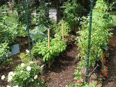 How to Turn Lawn into Vegetable Garden, Flower Beds or Wildlife Haven Organic Farming, Organic Gardening, Gardening Tips, Urban Gardening, Flower Gardening, Gardening Courses, Urban Farming, Indoor Gardening, Hay Bale Gardening