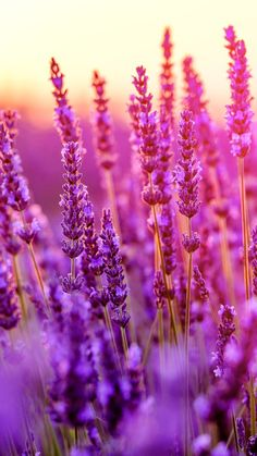 ideas for colorful nature photography flowers fields Natur Wallpaper, Frühling Wallpaper, Spring Wallpaper, Holiday Wallpaper, Galaxy Wallpaper, Aesthetic Iphone Wallpaper, Aesthetic Wallpapers, Animal Wallpaper, Computer Wallpaper