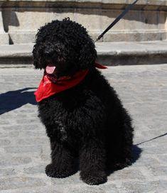 Labores Trujillo Dogs, Animals, Animales, Animaux, Pet Dogs, Doggies, Animal, Animais
