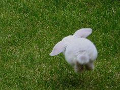 Flying Bunny Butt!
