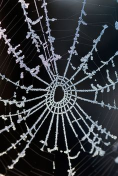 Frosted spider's web by Val Corbett