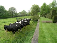 ha-ha Wall alternative to fencing when trying to keep cattle out of house yard but not destroy view