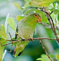 Santa Catarina bird checklist - Avibase - Bird Checklists of the World