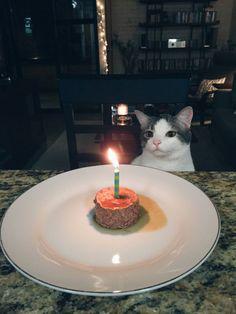 ¡Feliz cumpleaños, gatete!. #humor #risa #graciosas #chistosas #divertidas