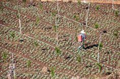 Como Montar uma Fábrica de Fertilizantes Agrícolas http://engetecno.com.br/port/proj.php?projeto=fabrica-para-producao-de-adubo-5000-kg-dia Como Montar uma Fábrica de Fertilizantes, Como Montar uma Fábrica de Fertilizantes Foliares, Como Montar uma Fábrica de Adubo, Como Montar uma Fábrica de Adubo Orgânico, Como Montar uma Fábrica de Adubo, Como Montar uma Fábrica de Fertilizantes NPK, Projeto de Fábrica de Fertilizantes, Projeto de Fábrica de Fertilizantes Foliares, Projeto de Fábrica de…