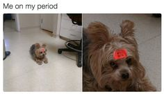 19 Memes About Periods That Are Too Fucking Real
