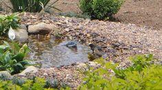 Laguinhos :: Fontes, Chafarizes, Cascatas, Cachoeiras - Laguinhos para Peixes e Tartarugas