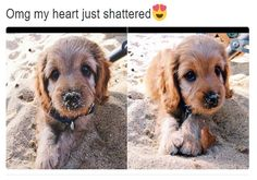 Animal memes of the day. Check this cool compilation of top 38 hilarious animal memes that will absolutely make you smile. Cute Puppies, Cute Dogs, Dogs And Puppies, Doggies, Cute Little Animals, Cute Funny Animals, Funny Animal Memes, Funny Dogs, Animal Humor