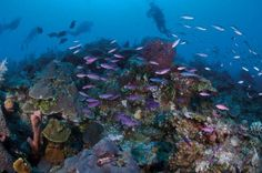 Turks and Caicos: il paradiso tropicale a sud delle Bahamas #diving #caraibi