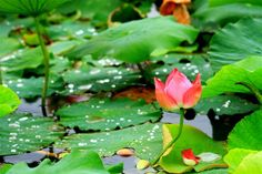 Curso de Reiki Usúi Tradicional Nivel III - Maestros de Reiki - Formamos Profesionales de Reiki - Barcelona, Plant Leaves, Yoga, Plants, Traditional, Teachers, Centre, School, Barcelona Spain