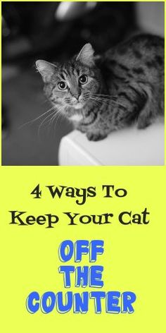 4 Proven Ways To Keep Your Cat Off The Counter | Petslady.com