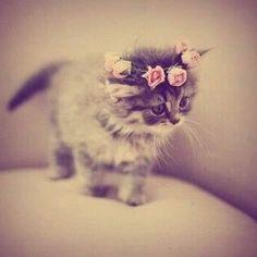I love dark cats :*